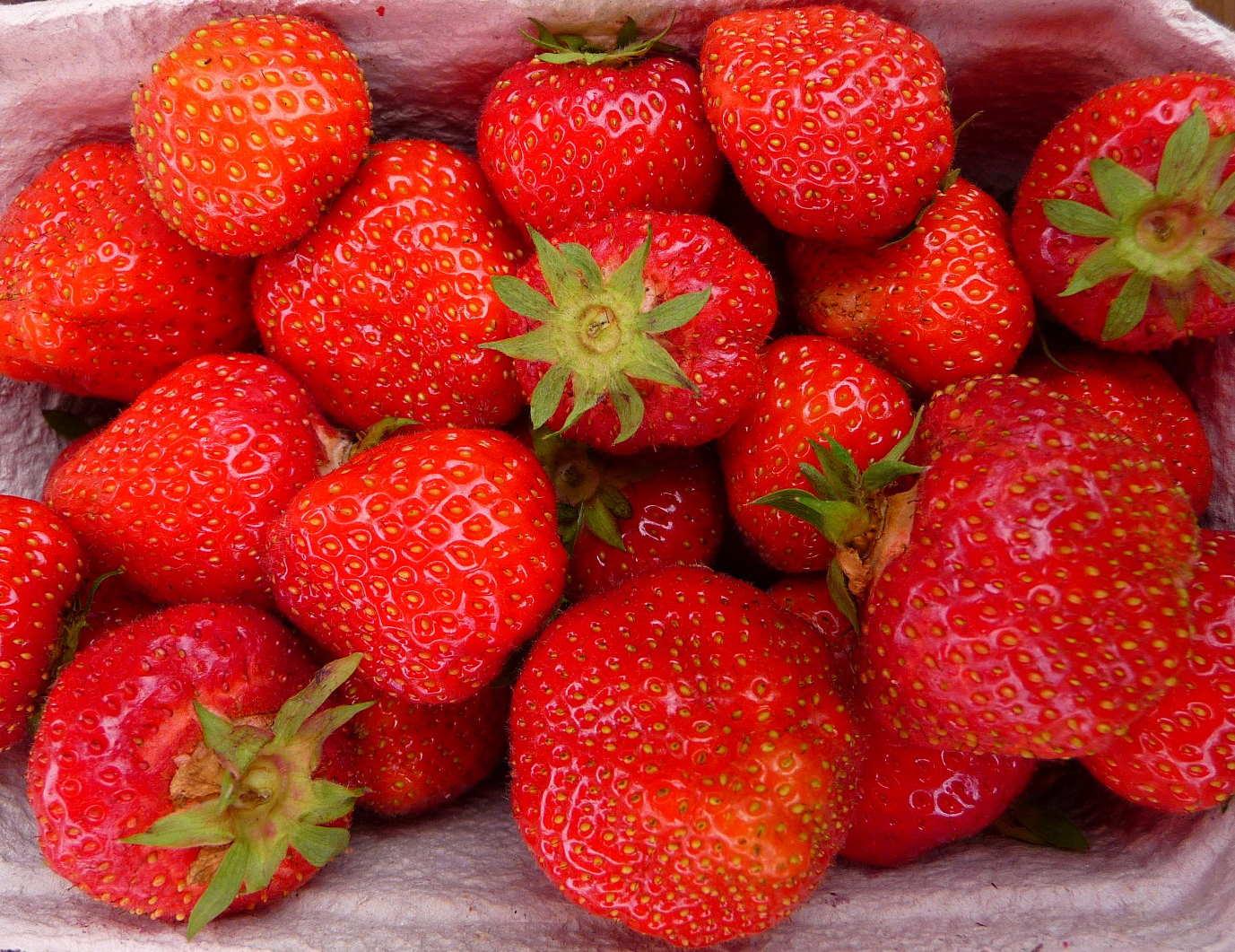 Зенга зенгана ягоды